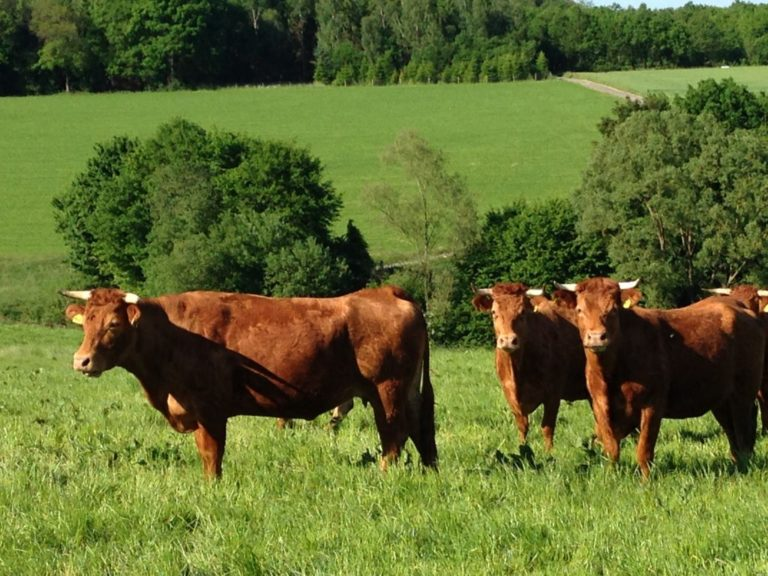 Limousin Rindfleisch