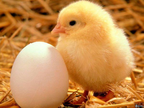 Eier vom Bauernhof Seifen in Schürdt